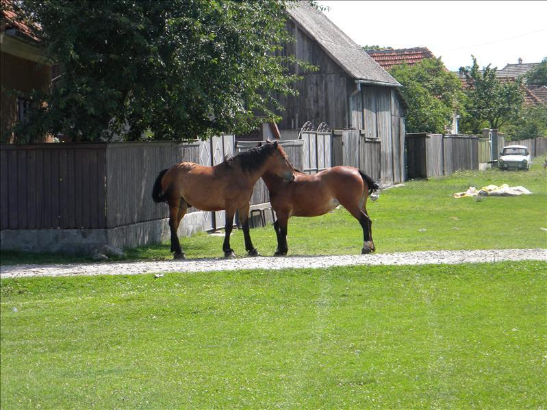 Horsey Hugs