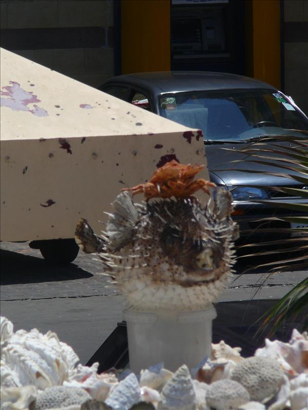 Vuurtoren - Blowfish