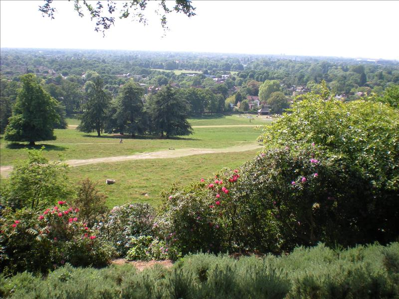 Richmond Park - 26th May