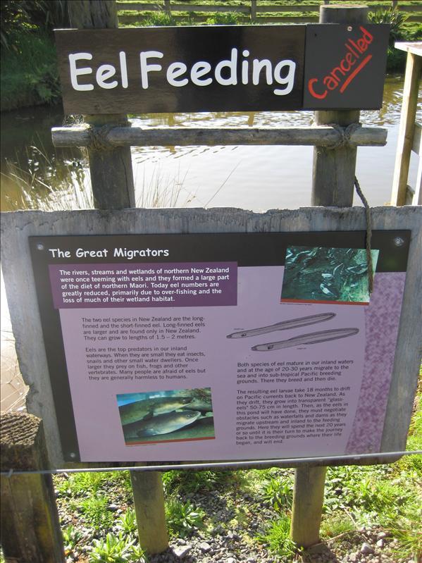 Wtf? Eel feeding?? No wonder it was cancelled :P