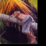 climb a coconut trees