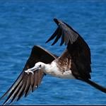 watch a sea  gull catching fish.