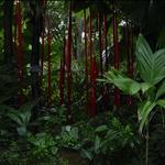 botanical garden visit 10-06 011.jpg