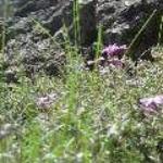 spring 089.JPG