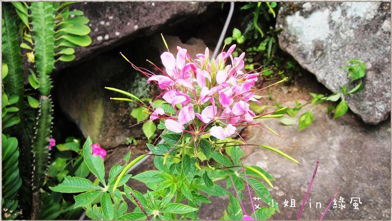 美麗的花朵-10