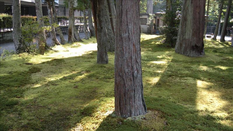 瑞巖寺庭園的青苔好厚   還派有專人保養