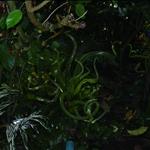 botanical garden visit 10-06 013.jpg