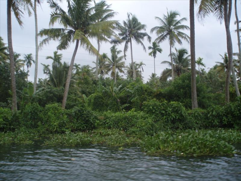 Backwaters - South India