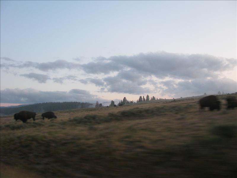 vroeg op voor wildlife (die het beste te zien zijn bij zonsopgang en zonsondergang)