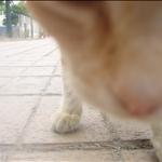 Attack of el gato!