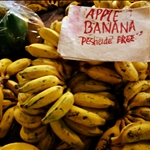 Hilo - Farmers Market, Apple Bananas
