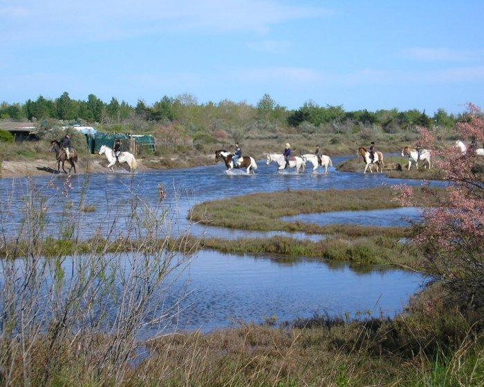 Camargue horses at Marseillan.