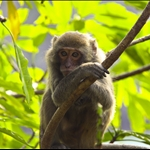 14 Mar '09 - Monkey Island