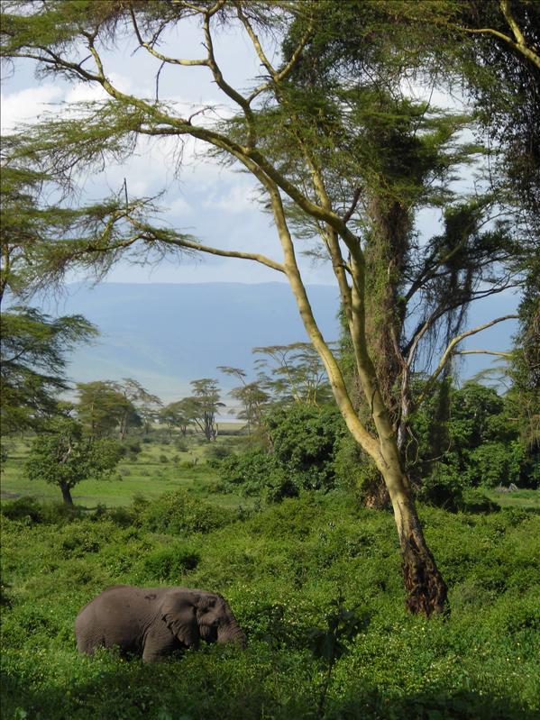 elephant•Ngorongoro