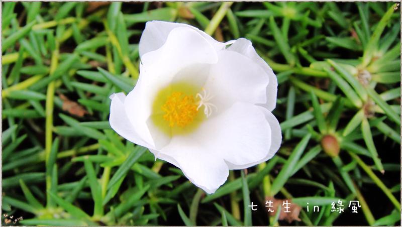 美麗的花朵-7