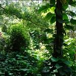 Kauai - Hiking at Ke