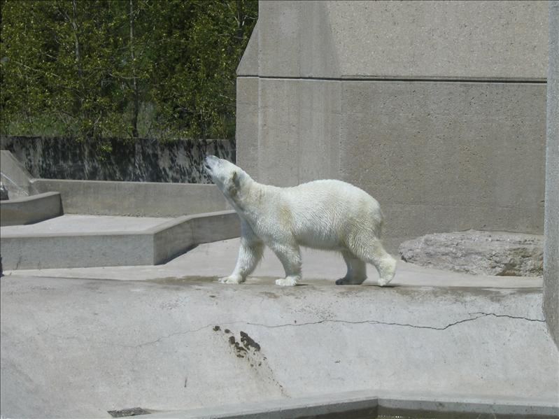 Toronto Zoo - 10