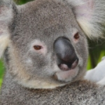 2008 Australia Trip