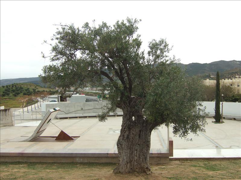 Antequera - Dolmens