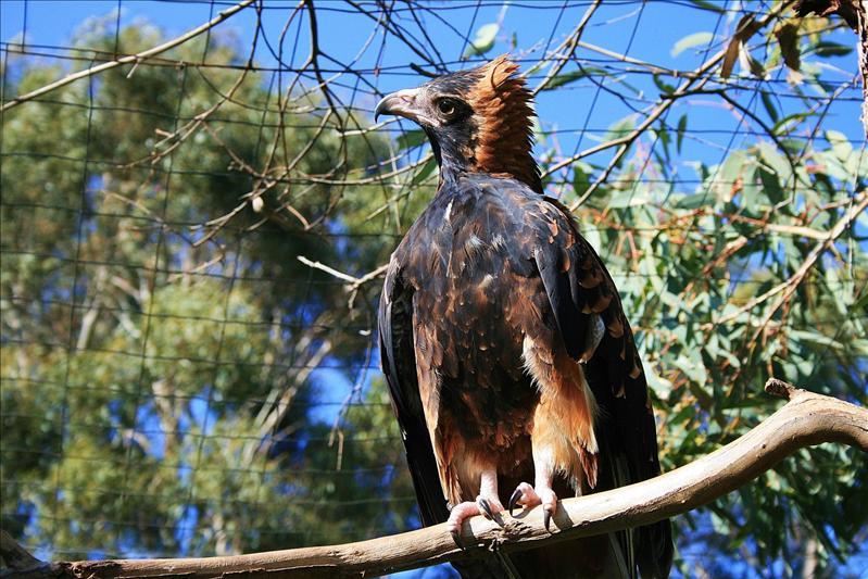 Wildlife park - Phillip Island.