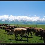 那拉提 空中草原