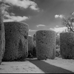 Cylindrical topiary