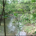 The River Cherwell near Hampton Gay