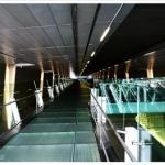 changi terminal 3