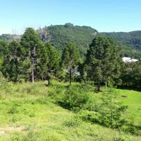 Sítios/Áreas de Terra em Gramado, bairro Linha Arroio Forquilha