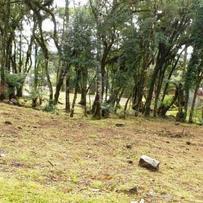 Terreno Condomínio em Canela, bairro Centro