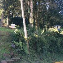 Terreno em Gramado, bairro Floresta