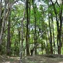 Terreno Condomínio em Canela, bairro Bosque Sinoserra
