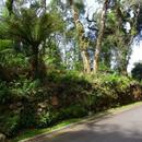 Terreno Condomínio em Gramado, bairro O Bosque