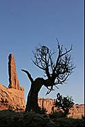 Spire and old tree, Park Avenue, Arches National Park, Moab, Utah