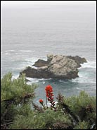 Red flower and Ocean, Big Sur, California