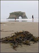 Seaweed and Beach, Natural Bridges, Santa Cruz