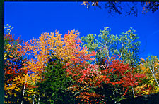 Fall colors against the sky, Franconia Notch State Park, New Hampshire