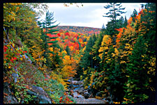 Fall foliage, Franconia Notch State Park, New Hampshire