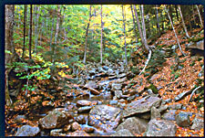 Rivulet and Fall foliage, Franconia Notch State Park, New Hampshire