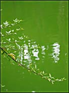 Branch and water, Stow Lake, Golden Gate Park