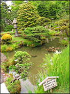 Pool, Japanese Tea Garden, Golden Gate Park