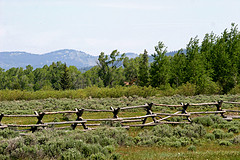 Osprey on fence, Grand Teton National Park