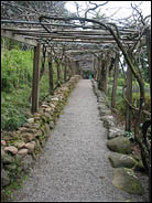 Path through dried vines, Hakone Gardens, Saratoga