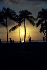 Palm Trees, Waikiki Sunset, Honolulu, Hawaii