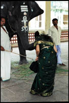 Elephant, Abhirami Temple, Thirkadayur, Tamil Nadu