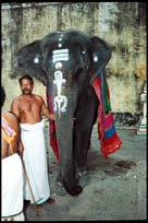 Mahout and Elephant, Abhirami Temple, Thirkadayur, Tamil Nadu