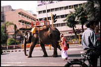 Elephant strolling to Sancheti Bridge, Pune, Maharashtra. The stereotypical image of India which I finally saw after decades