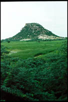 Mountain with greenery and rock vying for real estate, outside Hyderabad, Andhra Pradesh