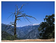 Vista, Kings Canyon and Sequoia National Park