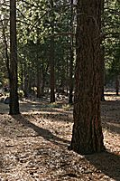 Trees and Shadow, Zumwalt Meadow, Kings Canyon National Park